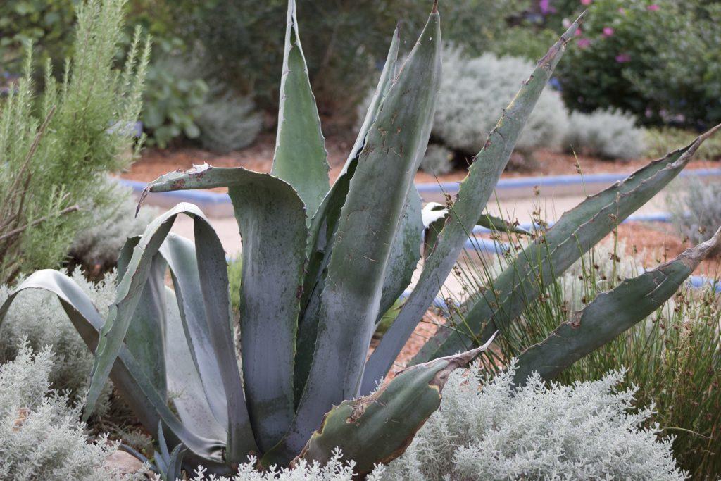 Un doux jardin marocain en Bretagne
