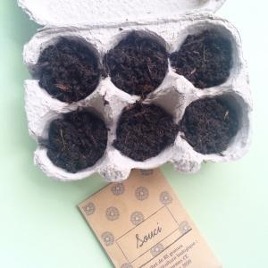 La box à planter : un jardin dans mon appart'