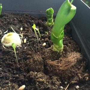 Je mange et je cultive #poireau