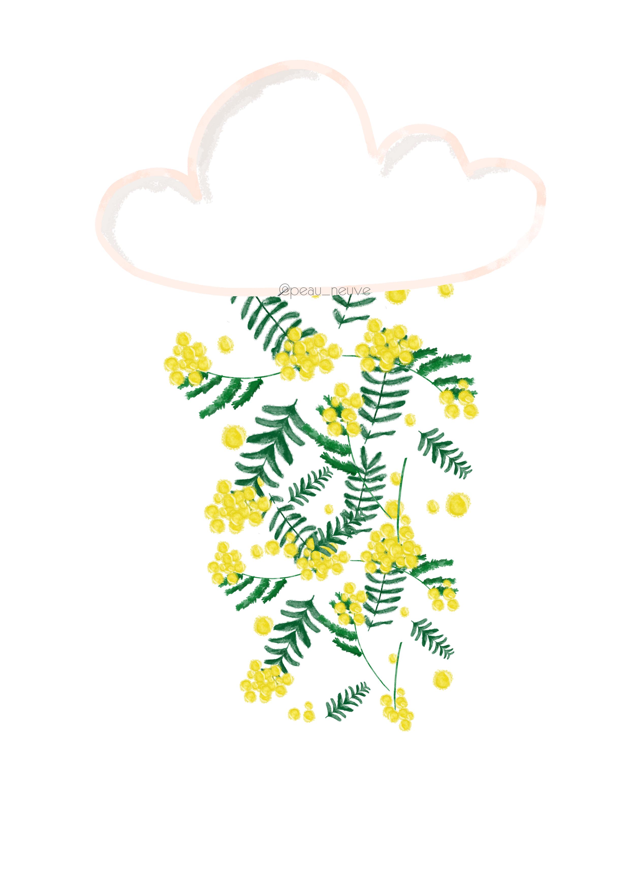 affiche pluie de mimosa - ILLUSTRATION